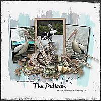 Pelican_webjmb1.jpg