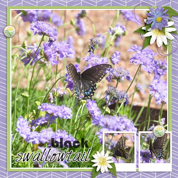 Black Swallowtail - Aug temp challenge