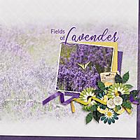 July-19-Lavender-FieldWEB.jpg
