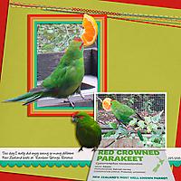Survivor3_KnifeSkills_Red-Crowned-Parakeet-copy.jpg