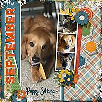 Puppy_Sitting_in_September_dss.jpg