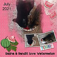 Sasha_Bandit.jpg