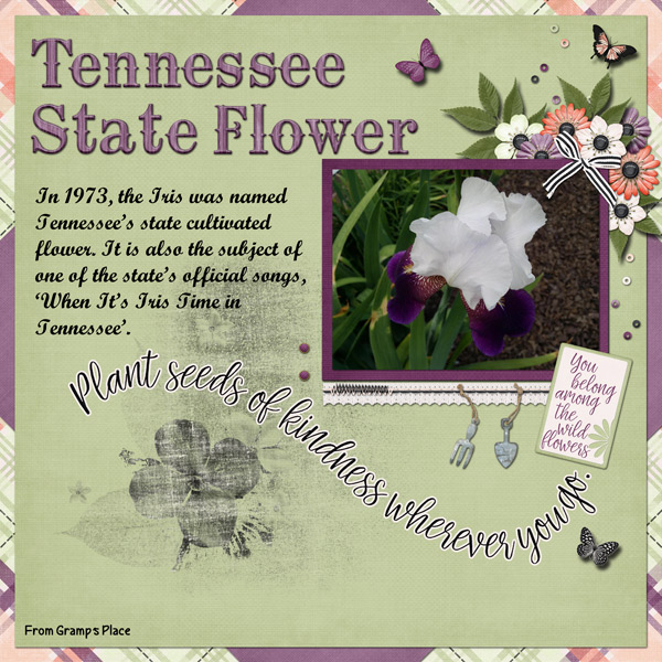 Tennessee State Flower