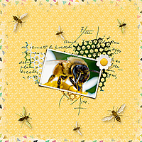 Bees_ollitko.jpg