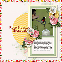 GS_Rose-Breasted-Grosbeak_Buffet.jpg