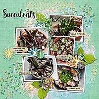 succulents_1.jpg