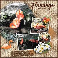 Flamingo6.jpg