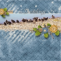 The_Ducklings_med_-_1.jpg