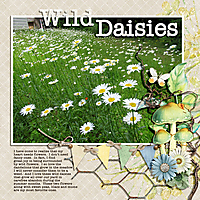 WILD-DAISIES.jpg