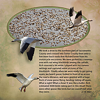 snow_geese_in_the_sky_flock_sq_small.jpg