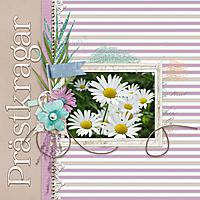 Daisies5.jpg