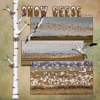 snow_geese_3_pics_sq_small.jpg
