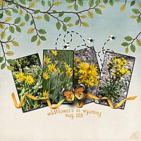 wildflowers-in-wyoming-small.jpg