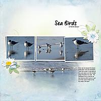 gs-scrapliftBeach-Walk-Sea-Birds.jpg