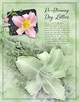 Re-Blooming-Daylillies-web.jpg