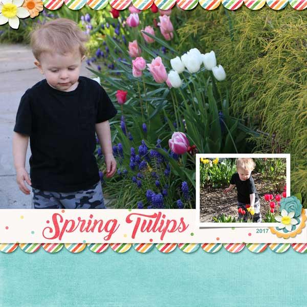 04_Cameron-tulips