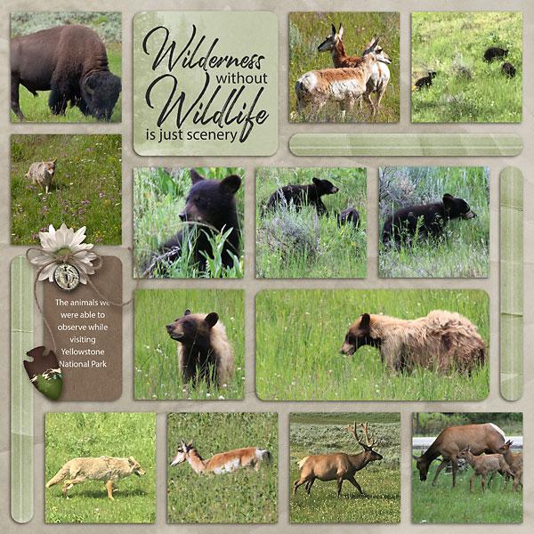 07_Yellowestone-wildlife-copy