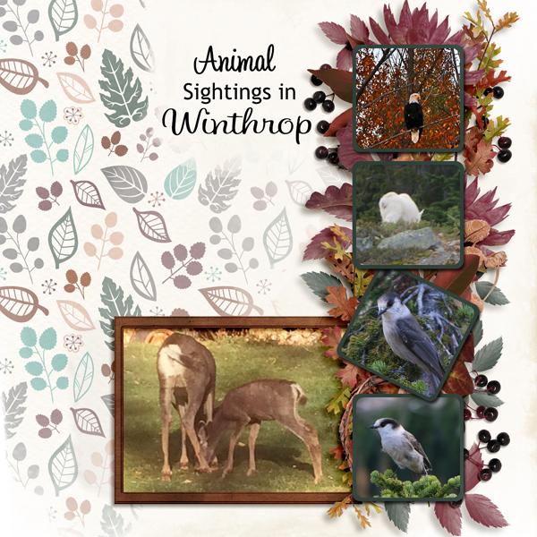 10_Winthrop-animals