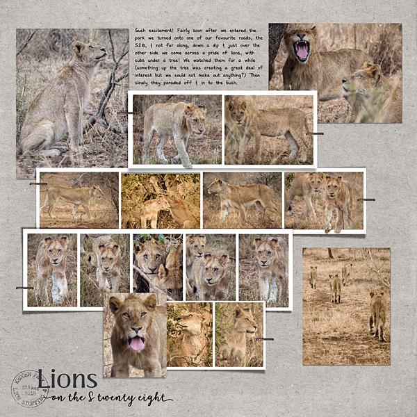 Lion Sighting No 4