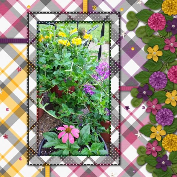 Greenhouse Favorites