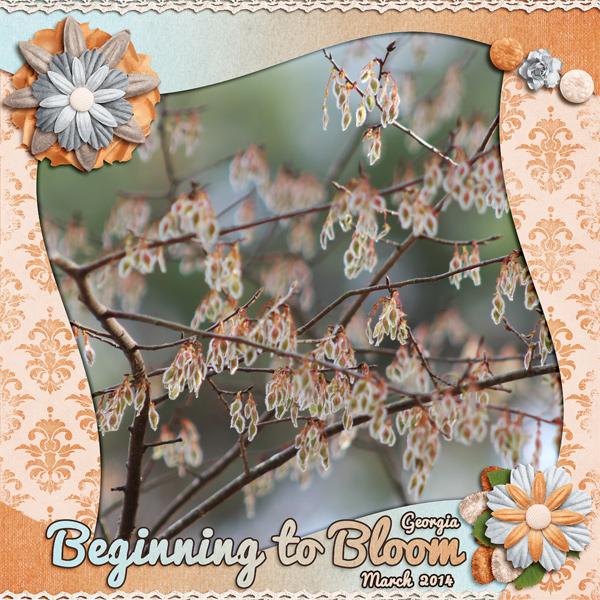 Beginning to Bloom