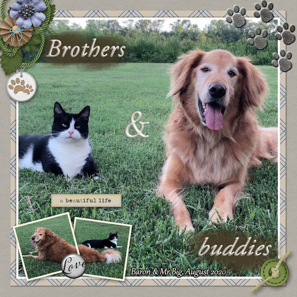 Brothers and Buddies