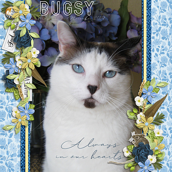 Bugsy - Always in Our Hearts
