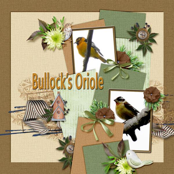 Bullock_s_Oriole_small