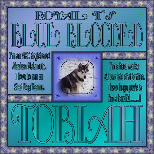 RoyalT's-BlueBlooded-Tobiah