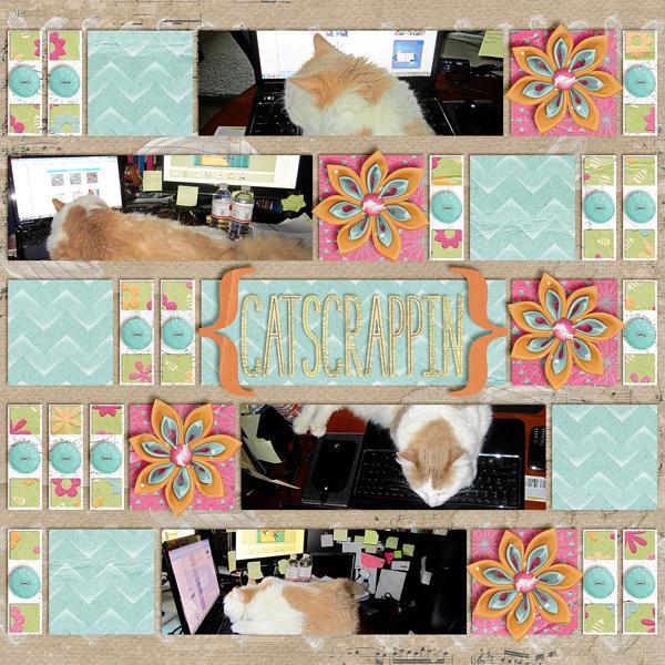 Catscrappin