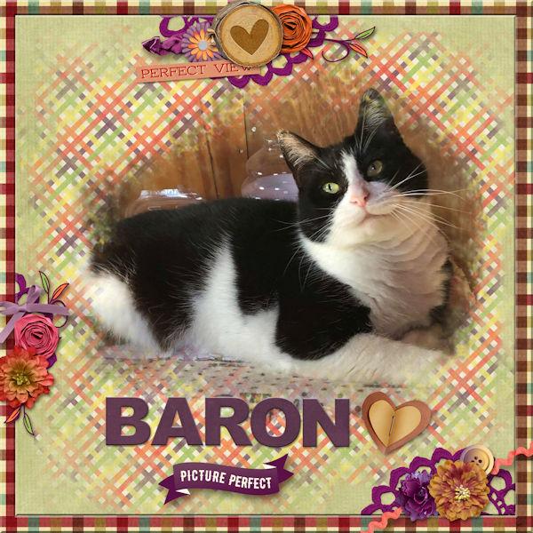 Picture Perfect Baron