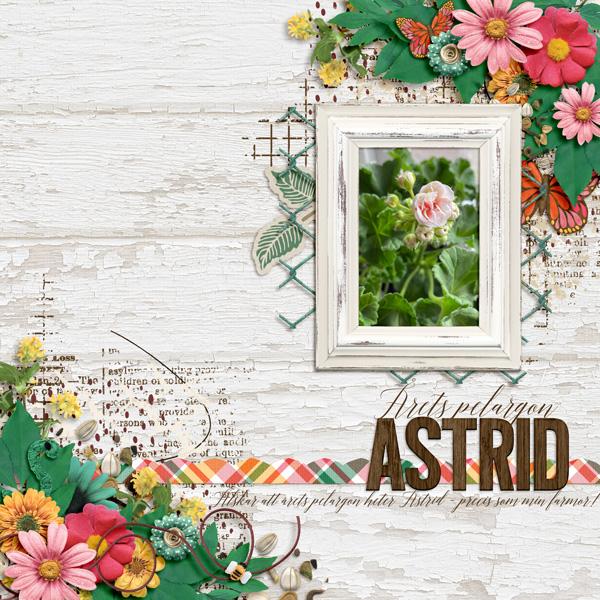 Astrid - geranium of the year