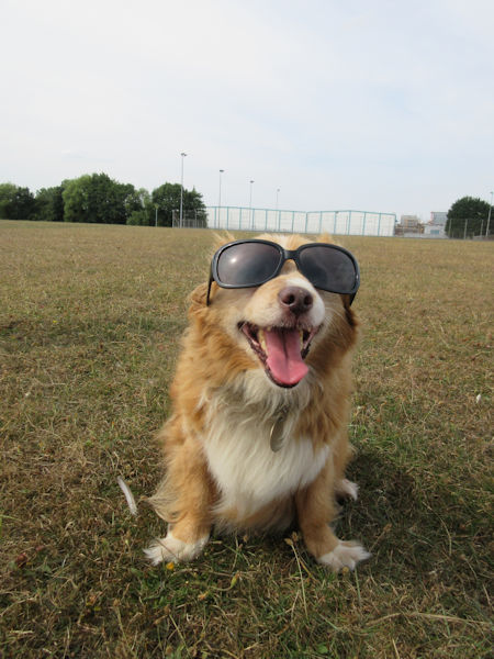 Tizer in shades