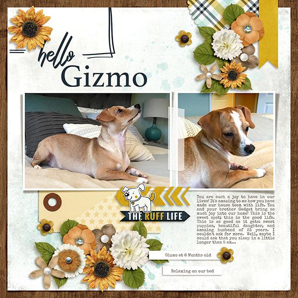 Hello Gizmo!