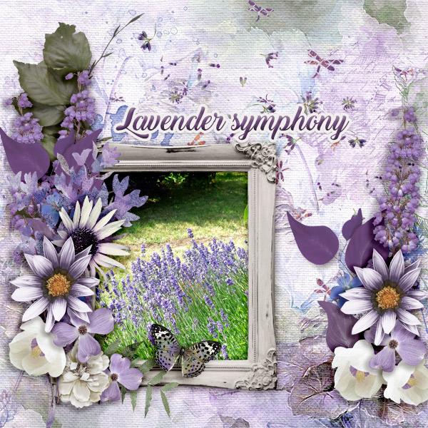 Lavender-symphony