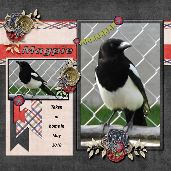 Magpie_small