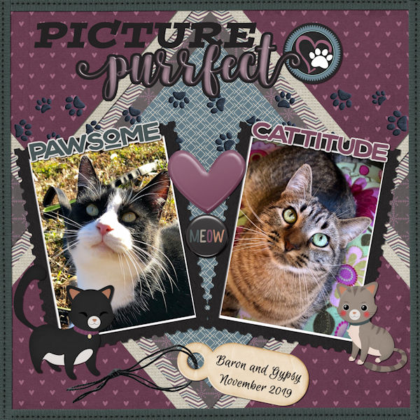 Picture Purrfect