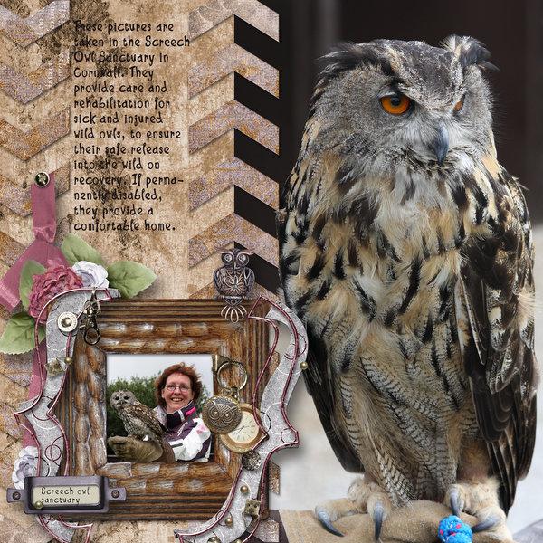 Owl Santuary
