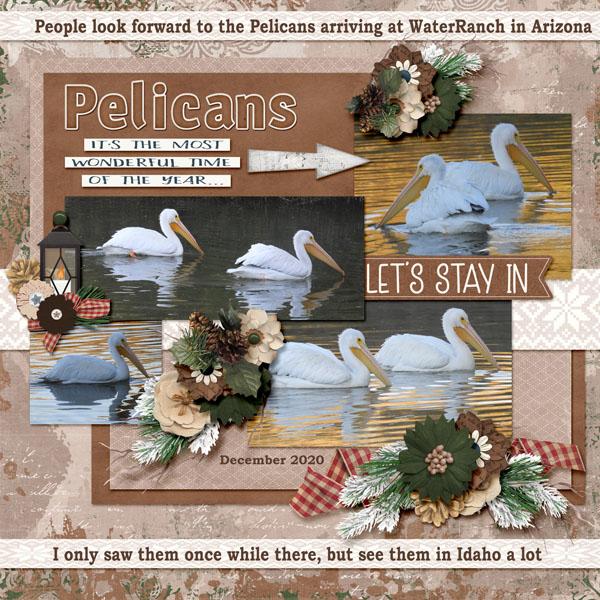 Pelicans_cozy