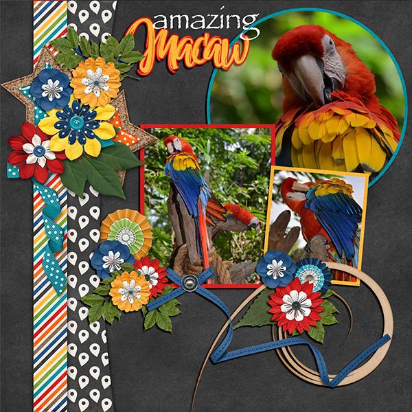 Amazing Macaw