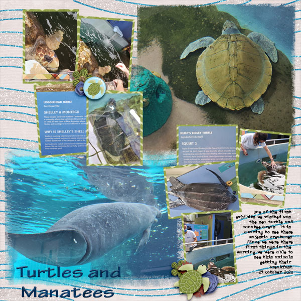 Turtles and Manatees at Mote Marine Sarasota