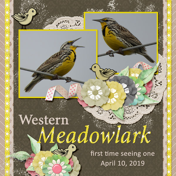 Western_Meadowlark_small