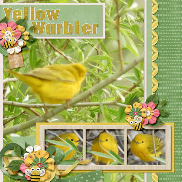 Yellow_Warbler_Busy_Bees