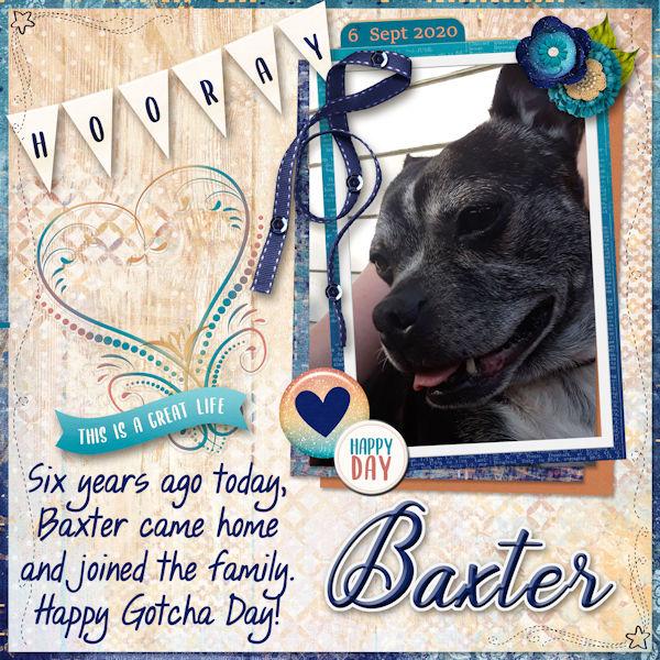 Happy Gotcha Day Baxter