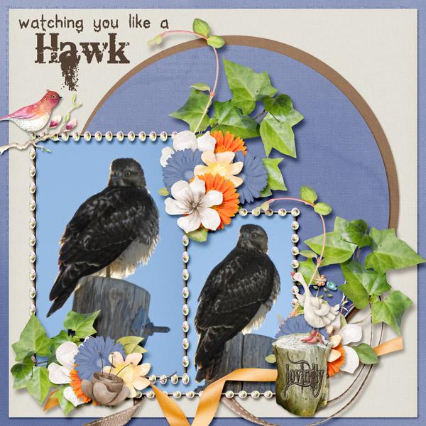 hawk_small