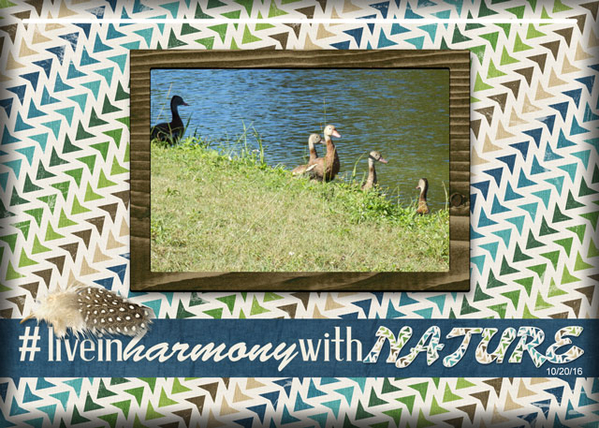 ATC 2017-124 #Live In Harmony With Nature