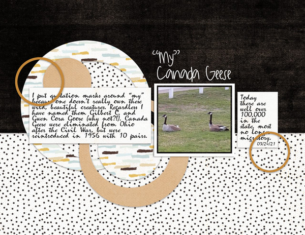 """""""My"""" Canada Geese"""