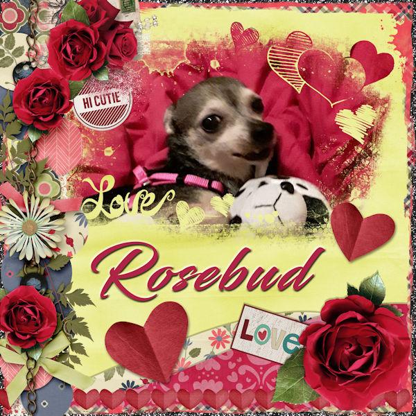 Rosebud Love