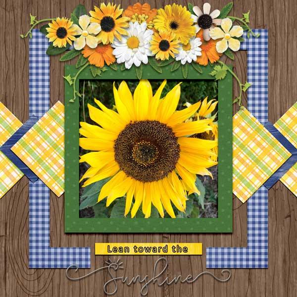 sunflower mm