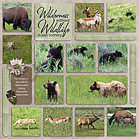 07_Yellowestone-wildlife-copy.jpg